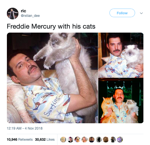 Cat News You Can Use The Freddie Mercury Edition , CatCon 2019