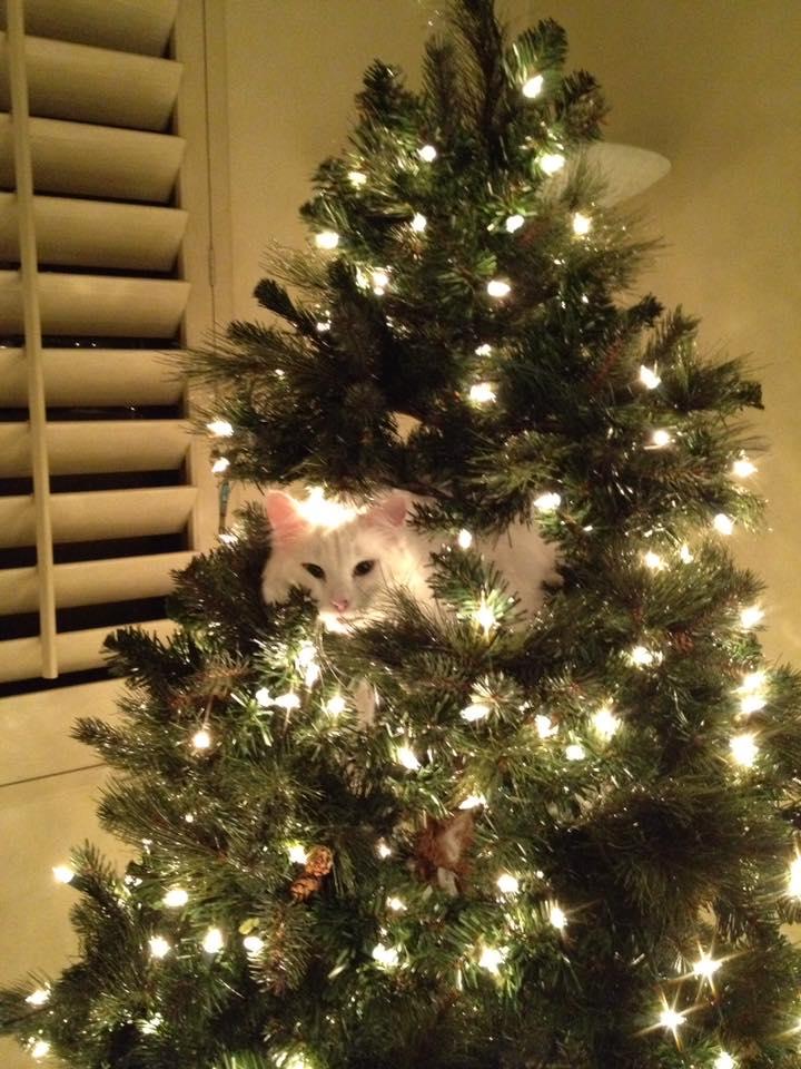 white cat in tree